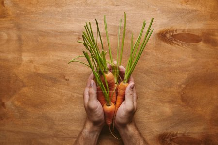 Top view of raw carrots in male hands on wooden table