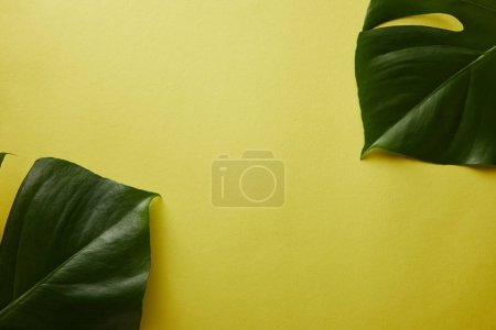 top view of palm tree leaves on yellow surface