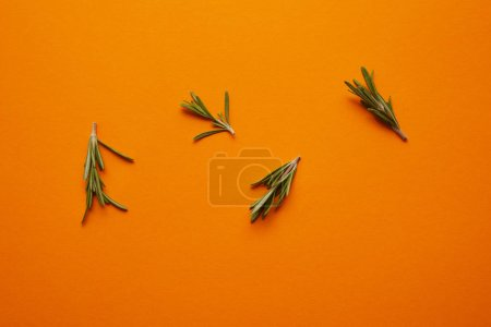 Photo for Top view of fresh healthy rosemary on orange background - Royalty Free Image