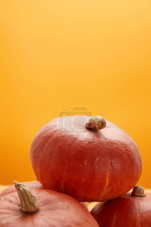 close-up view of fresh ripe pumpkins isolated on orange background