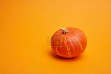 Photo pour Vue rapprochée de citrouille mûr tout seul sur fond orange - image libre de droit