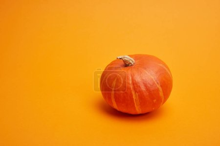 close-up view of single whole ripe pumpkin on orange background