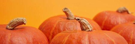 Photo pour Affichage horizontal des citrouilles lumineuses mûres fraîches sur orange - image libre de droit