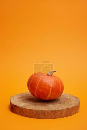 Photo pour Citrouille mûre entière sur panneau rond en bois sur fond orange - image libre de droit