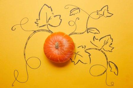 Photo pour Vue de dessus de citrouille mûr entiers avec des feuilles dessinées sur fond orange - image libre de droit