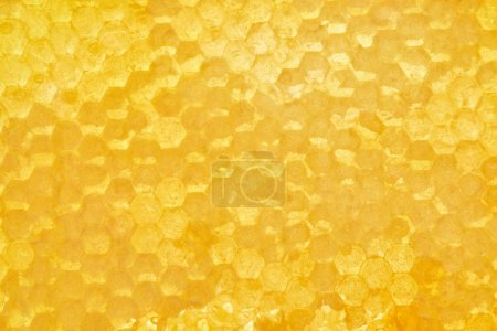 Photo for Full frame of beeswax with honey as background - Royalty Free Image