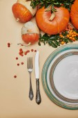 elevated view of festive table and pumpkins with firethorn berries for thanksgiving day