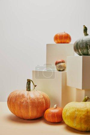 Photo pour Décoration automnale avec petites et grandes citrouilles sur les cubes et table - image libre de droit