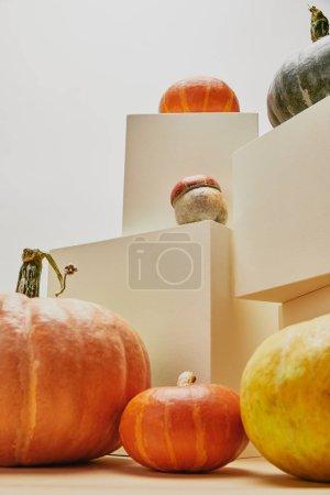Foto de Decoración con estilo otoñal con calabazas en cubos color beiges - Imagen libre de derechos