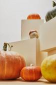 décor élégant automnal avec citrouilles sur cubes beiges