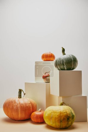 Photo for Autumnal decoration with orange, yellow and green pumpkins on cubes and table - Royalty Free Image