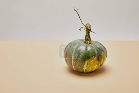 one ripe green pumpkin on beige table