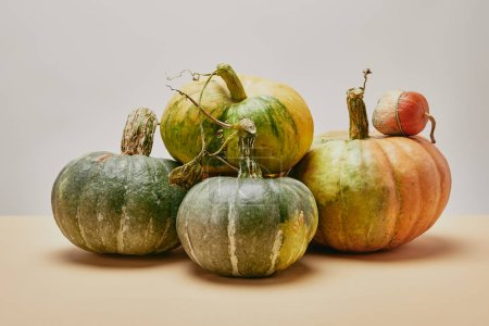 autumnal harvest of different green pumpkins on table