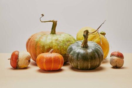 autumnal harvest of different colored pumpkins on beige tabletop