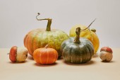 autumnal harvest of different colored pumpkins on beige tabletop