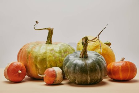 autumnal harvest of different big and small pumpkins on table