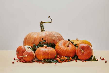 Photo for Orange pumpkins and firethorn berries on table as autumnal decor - Royalty Free Image