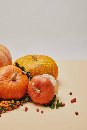Photo for Autumnal decoration with different pumpkins and firethorn berries on table - Royalty Free Image