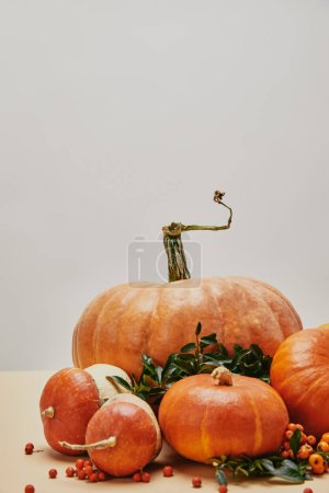 beautiful autumnal decoration with pumpkins and firethorn berries on table