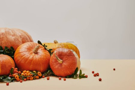 Photo for Autumnal decoration with pumpkins and firethorn berries on beige table - Royalty Free Image