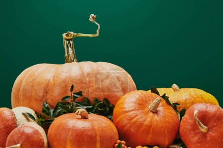 Photo for Autumnal decoration with pumpkins and firethorn berries isolated on green - Royalty Free Image