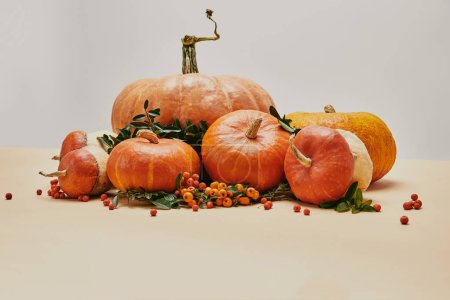 Photo for Seasonal decoration with pumpkins and firethorn berries on table - Royalty Free Image