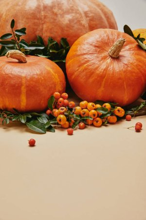 Photo for Autumnal decoration with pumpkins and firethorn berries on table - Royalty Free Image