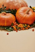 autumnal decoration with pumpkins and firethorn berries on table