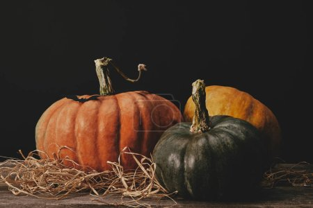 three ripe pumpkins and paper bat on table, halloween concept