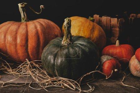 Photo pour Citrouilles sur table en bois avec foin, concept halloween - image libre de droit