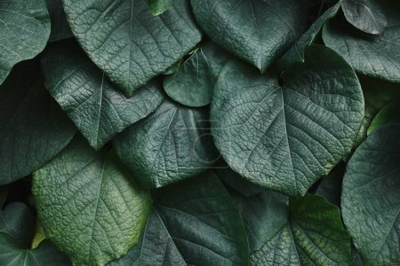 Photo for Close up of big green leaves in garden - Royalty Free Image