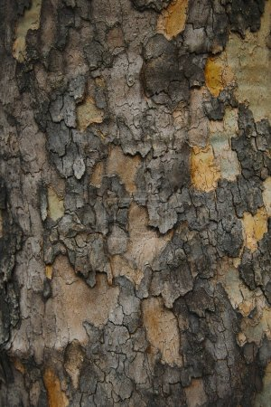 close up of grungy grey bark of tree