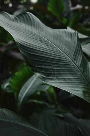 close up of beautiful dark green leaves in garden
