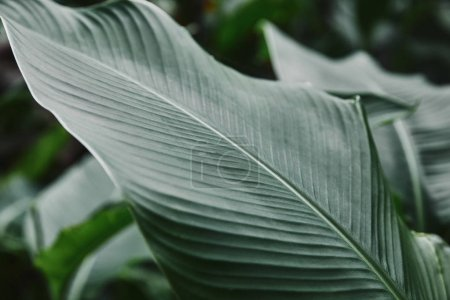 close up of big green leaf with veins in garden