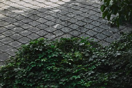 green bushes and concrete tiles in garden