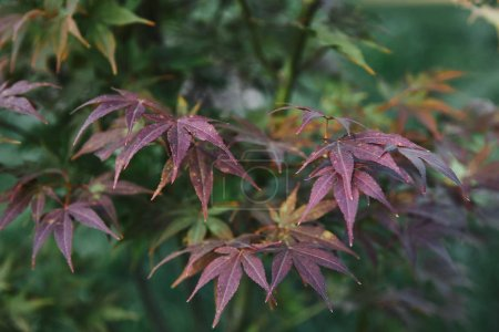 beautiful purple and green leaves on twigs in park