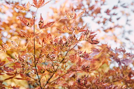 autumnal orange foliage on tree branches in park