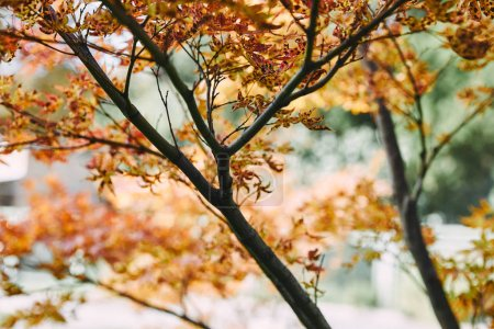 tree branches with autumnal orange leaves in park