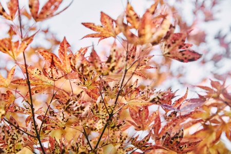 beautiful orange leaves on tree branches in park