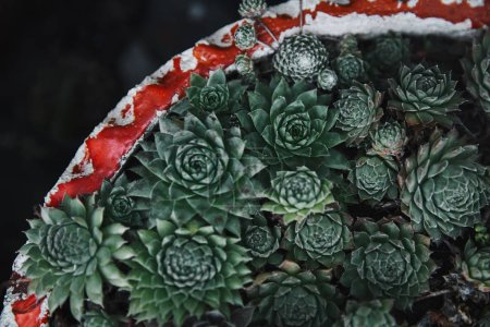 top view of beautiful green potted succulents