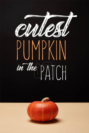 """one orange pumpkin on table with """"cutest pumpkin in the patch"""" lettering"""