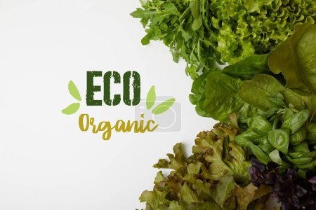 "top view of fresh various leaf vegetables on white surface with ""eat organic"" lettering"