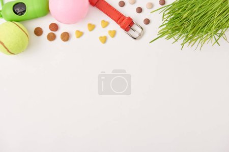 flat lay with arranged balls, dog collar and pet food on white surface