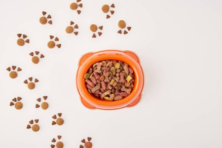 elevated view of paws made of dog food and plastic bowl with pet food on white surface