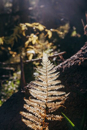 close-up shot of fern branch in mountain forest under sunlight, Carpathians, Ukraine