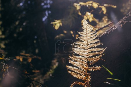 Photo for Close-up shot of fern branch in mountain forest under sunshine, Carpathians, Ukraine - Royalty Free Image