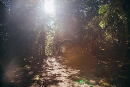 Photo for Beautiful mountain pathway in forest under sunlight, Carpathians, Ukraine - Royalty Free Image