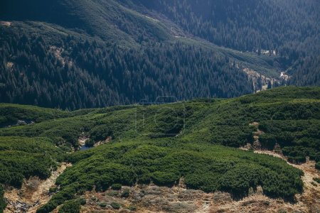 aerial view of green mountains landscape, Carpathians, Ukraine