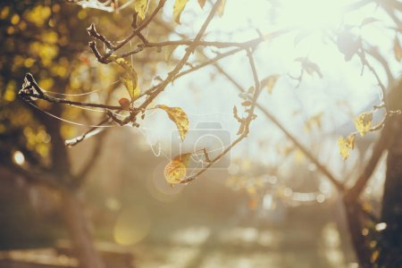 close-up shot of spider web on tree branch with golden leaves in front of shining sun