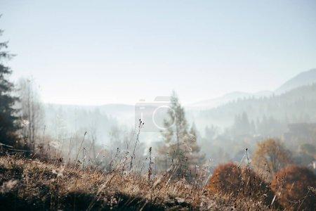 Photo pour Gros plan des plantes sur la colline avec des montagnes brumeuses sur le fond, Carpates, Ukraine - image libre de droit
